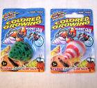 GROWING HERMIT CRAB seashell novelty toy trick shell pet crabs new sea