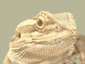 bearded dragon kit in Reptile Supplies