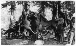 deer,camping,hunting,bucks,tents,dwellings,men,equipment,trees,c1907