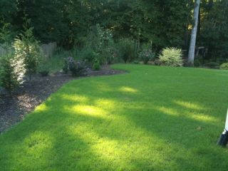 bermuda grass seed in Ornamental Grasses