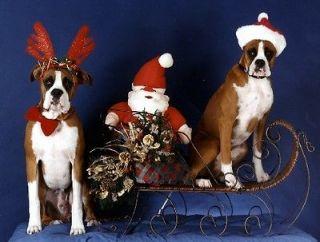 Pet Christmas CardsDog Boxer Sleigh Ride
