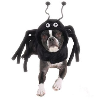 Casual Canine Spider SPIDEY PAWS Dog Pet Halloween Costume XS S M L XL