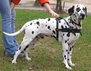 extra large leather dog harness