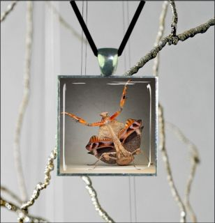 INSECT LIFE BROWN PRAYING MANTIS SQUARE GLASS CABOCHON SILVER