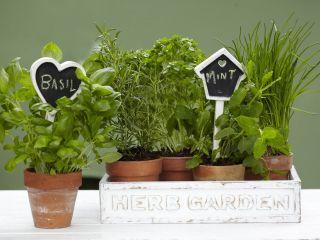 PLANT MARKERS GARDEN STAKES WHITE RUSTIC CHIC CHALKBOARD HOUSE & HEART