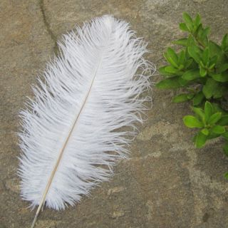 50pcs 6 18inch High Quality Natural OSTRICH FEATHERS Color Selection