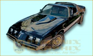 1981 Pontiac Special Edition Turbo Trans Am Decal & Stripe Kit
