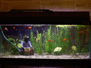You Can Build This Tropical Fish Aquarium from Plans