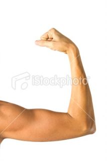 stock photo 6941054 human arm anatomy