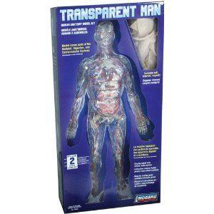 Lindberg Transparent Woman anatomy model kit NIB 76013