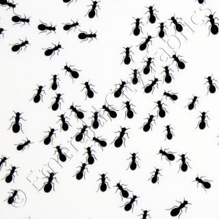 Timeless Treasures Ants Black White Bug Insects Cotton Quilt Quilting
