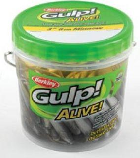Berkley Gulp 3 4 Shrimp Saltwater Alive Fishing Lure Bait Quarts w