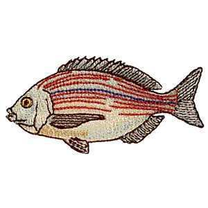 Black Sea Bream Saltwater Game Fish Iron on Patch