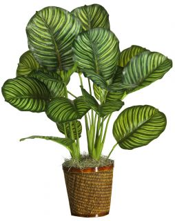 31 Calathea Silk Palm Floor Plant Real Touch New