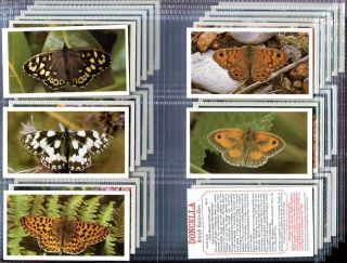 Tobacco Card Set Doncella British Butterflies Butterfly Photos