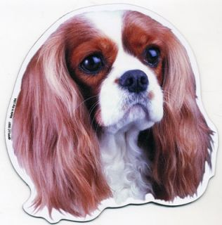 cavalier king charles spaniel great magnet for proud dog owners or