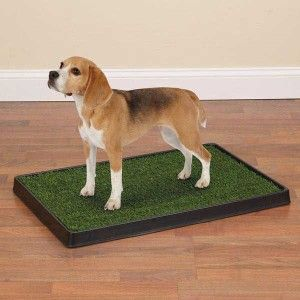 Clean Go Pet Indoor Dog Puppy Potty Grass 27 x 40 Large