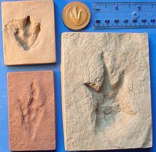 Set of 4 Baby Dinosaur Track Fossil Footprint Cast
