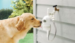 Outdoor Pet Drinking Fountain Dog Waterer by Contech Water