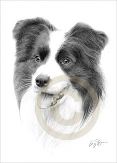 Dog Border Collie Pencil Drawing Giclee A4 Print Signed by Artist Le