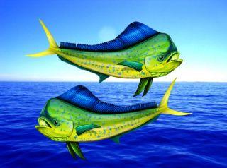Mahi Mahi Fish Dolphin Decal Vinyl Sticker Saltwater Boat Window