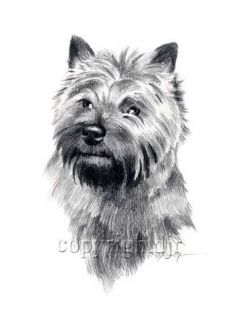 Cairn Terrier Dog Drawing Art Note Cards by Artist DJR
