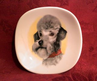 Royal Adderley Poodle Dog 4 Square Plate Coaster Bone China England
