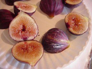 Turkey Fig Tree cuttings 8 for Rooting Sweet Juicy Dark Figs