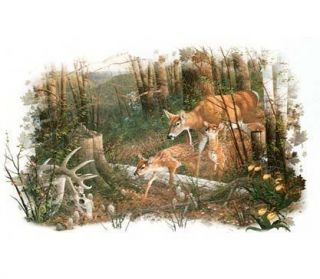 234 Deer Fawns Heat Transfer T Shirt Fabric Iron On