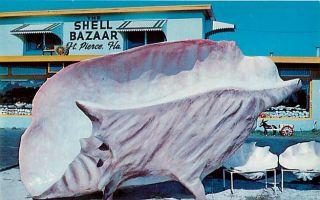 FL Fort Pierce Stuart Florida Shell Bazaar Largest Conch Shell Dexter