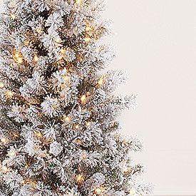 SNOW FLOCKED Pre Lit Christmas Tree 300 lights on 518 natural
