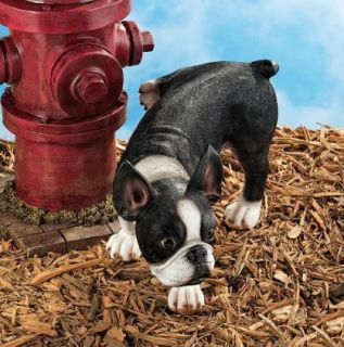 Gotha Go Joe the Peeing Boston Terrier Statue Figure. Home Decor Dog