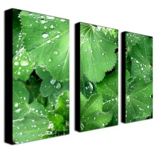 Trademark Global Water Droplets by Kathie McCurdy Canvas Art (Set of 3
