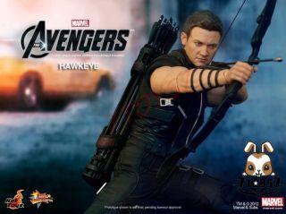 Hot Toys 1/6 Hawkeye_ Box Set _The Avengers Marvel Clint Barton NOW