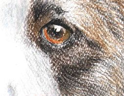 Das Original American Staffordshire Terrier 10A3 Farbig