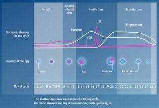 Clear Blue Easy Fertility Monitor Plus Sticks