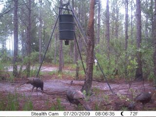 Florida Hog Hunt Wild Florida Boar Hog Hunting