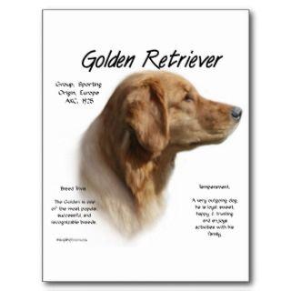 Diseño de la historia del golden retriever tarjeta postal de