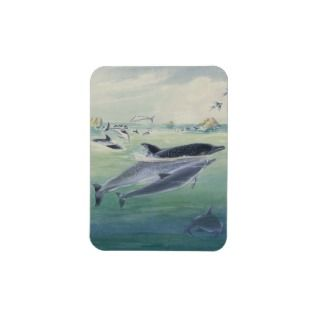 spinner dolphin calf swims close to its mother rectangle magnets