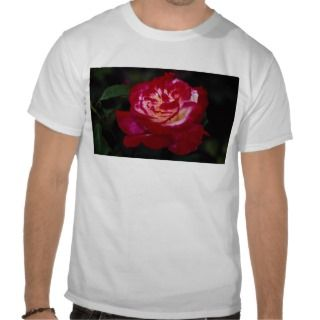 Double Delight Hybrid Tea Rose Andeli Roses Tee Shirts