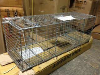Animal Trap Skunk Racoon Cat 36 x12 x12 Cage trap Rabbit Pet Humane