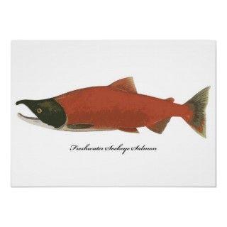 Wild Freshwater Sockeye Salmon Fish Poster