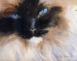 Print Ragdoll Himalayan Siamese Cat Art Painting