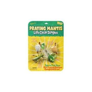 New Insect Lore Praying Mantis Life Cycle Stages