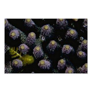 Beautiful Hard corals harboring a tiny yellow Chri Posters