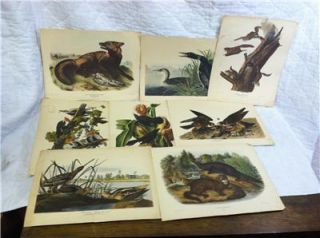 Antique John James Audubon Prints Lithographs Bowen 1844 Havell 1835
