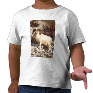 USA, Alaska, Chugach State Park, Dalls Ram T shirts