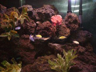 Lava Rocks Fish Aquarium Tank Reptile Lizard Terrarium