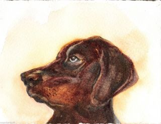 Original Watercolor Painting Max Animal Dog Brown by Marsha