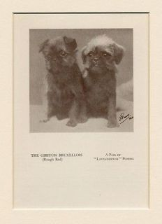 Brussels Griffon Bruxellois Original Vintage 1934 Puppy Dog Print Two